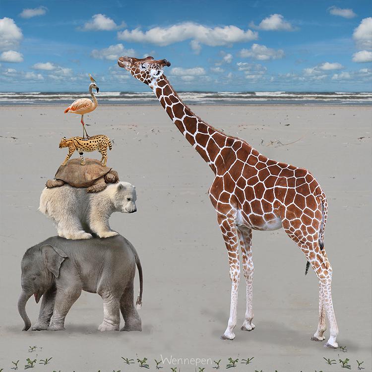 fotocollages-dieren